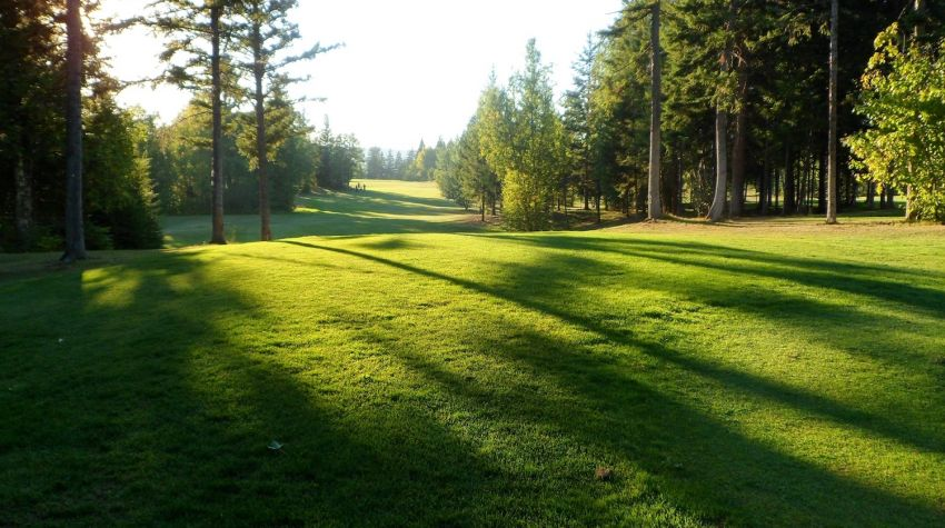 golf fairway sun and shadow
